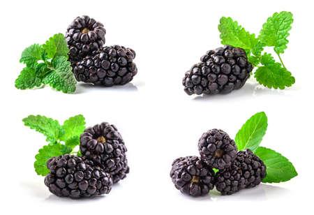 Closeup shot of fresh blackberries set. Isolated on white background. 免版税图像