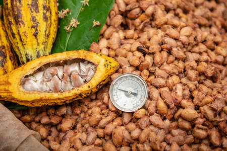 Temperature measurement of cocoa beans fermented in wooden barrels, to maintain the quality of cocoa flavor.