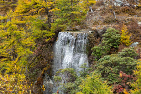 Beautiful waterfall from the melting of snow mountains in autumn yellow pine forest, Waterfall with autumn leaves in Yading Nature Reserve, Sichuan, China Imagens