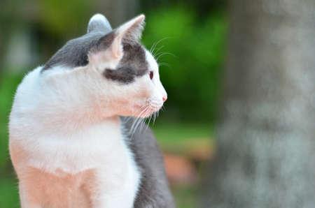 bodily: Cat manner