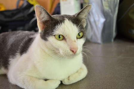 deportment: Cat manner