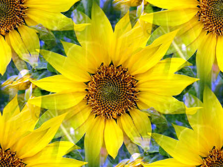 alienation: sunflower