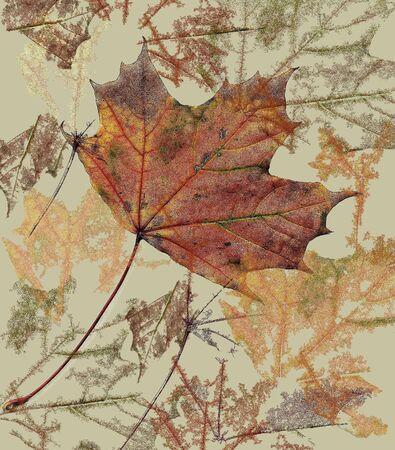Autumn colors Reklamní fotografie