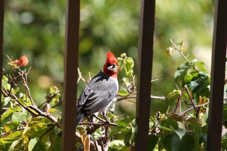 sneaky: Sneaky Bird