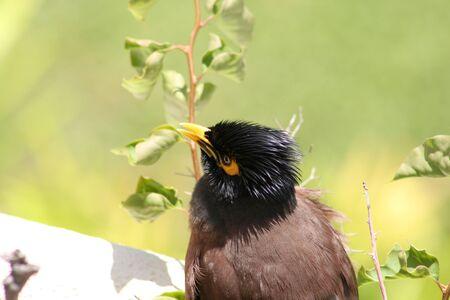 ledge: Bird on a Ledge