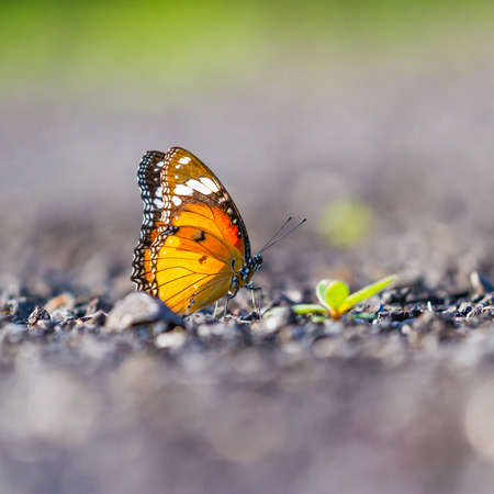 Orange butterfly sittng on the rock with the river background