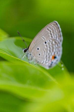 legs wide open: Butterfly perched on a leaf Stock Photo