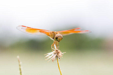 Dragonfly perched on a twig photo