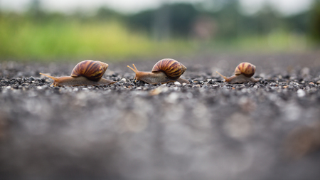 pursue: snail run
