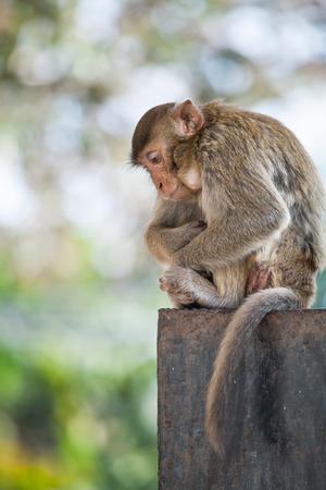 lonely Monkey photo