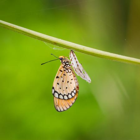 자연 속에서 태어난 바둑 나비 아기