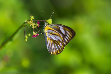 glower: A butterfly on grass glower Stock Photo
