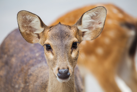 blotched: deer in the zoo. Stock Photo