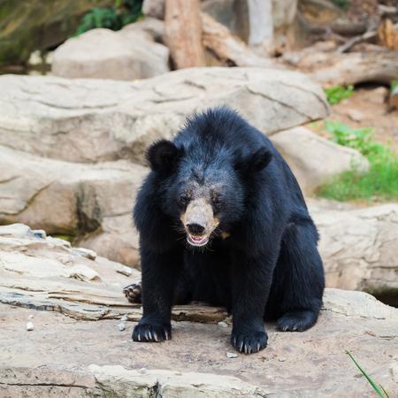 동물원에 아시아 흑곰 스톡 콘텐츠