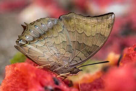 macro photography: wonderful world of wild butterfly macro