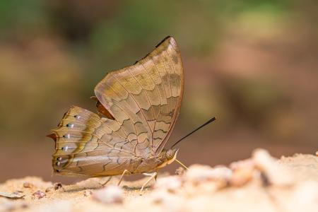 아름다운 나비 근접 촬영