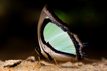 아름 다운 나비 접혀 날개와 앉는 다.