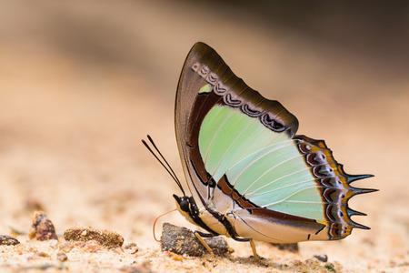 야생 나비 매크로의 멋진 세계 스톡 콘텐츠