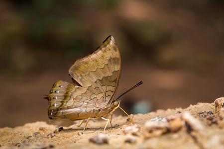 갈색 나비와 빈티지 배경