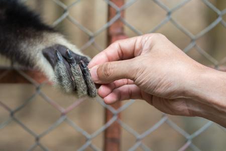 인간의 손에서 음식을 복용 원숭이 스톡 콘텐츠