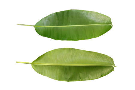 Banana banana leaf on a white background