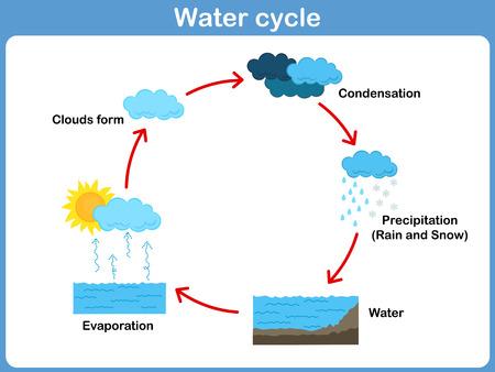 ciclo del agua: Vector Ciclo de agua para los niños