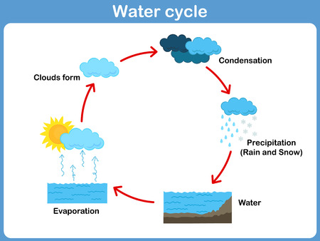 Vector Cycle of water for kids 矢量图像