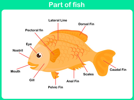 Leaning Parts of fish for kids   Worksheet