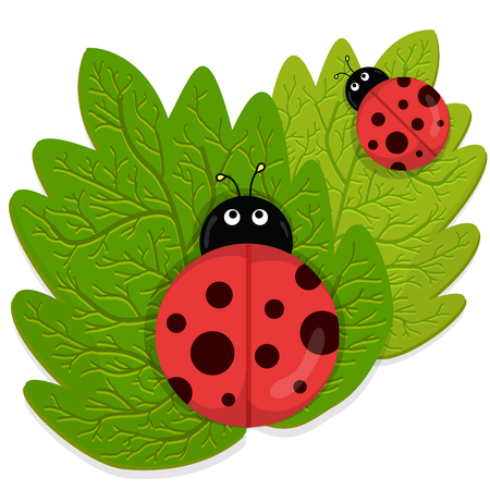 serene people: Ladybug on green leaf