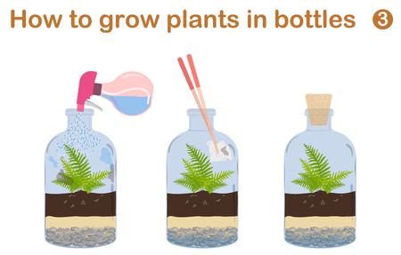¿Cómo hacer crecer plantas en botellas. Terrarios con el árbol.