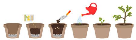 如何种植植物。为孩子们轻松一步一步