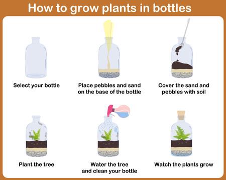 Cómo Hacer Crecer Plantas En Botellas. Terrarios Con El árbol ...