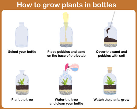 tiny: How to grow plants in bottles. Terrariums with tree.