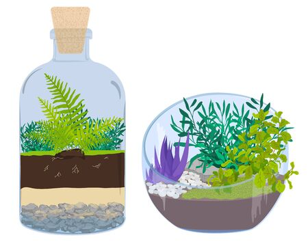 Plants in bottles. Terrariums with tree.