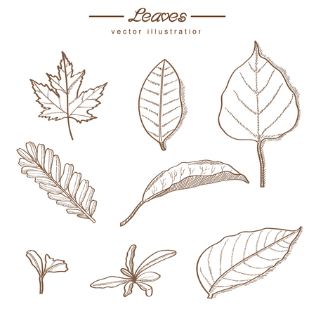 Hand drawn  leaves of nature - vintage style