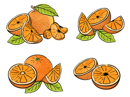 Set of orange fruit isolated on white. Different type of pieces.  Vector watercolor.
