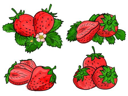 Set of strawberry fruit isolated on white. Different type of pieces.  Vector watercolor. Ilustração