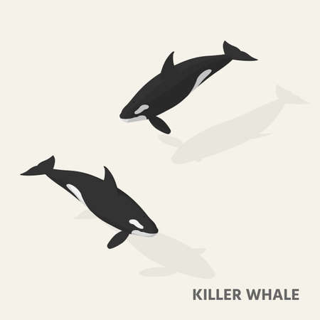 Killer whales in isometric view with shadow. Illustration