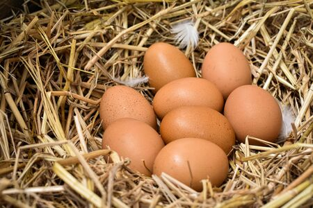 Many eggs in the nest are made from straw. Food obtained from chickens on farms. Healthy products from farmers. Products from rural areas. Фото со стока