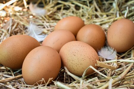 Many eggs in the nest are made from straw. Food obtained from chickens on farms. Healthy products from farmers. Products from rural areas.