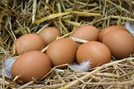 Many eggs in the nest are made from straw. Food obtained from chickens on farms. Healthy products from farmers. Products from rural areas. Imagens
