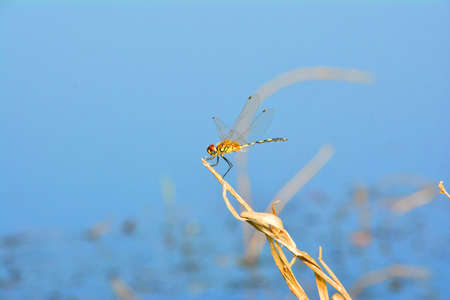 Dragonfly in the Puddle