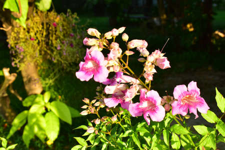 The White and Pink Flowers