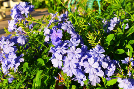 The Purple and Violet Flowers Stock Photo - 112659739