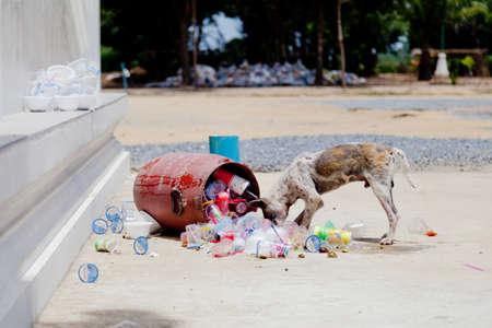 lepra: Un perro hambriento sarna es encontrar comida de basura en un templo en Tailandia Foto de archivo