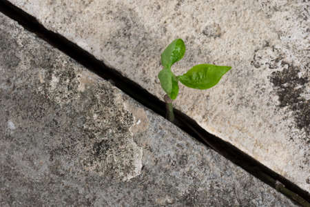 hormig�n: Young plant growing from concrete