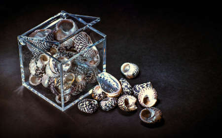 Plastic box filled with seashells Stock Photo
