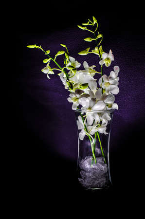 Small white orchid in a vase
