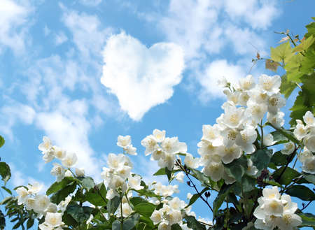 cloud in the shape of a heart and a blooming jasmine   photo