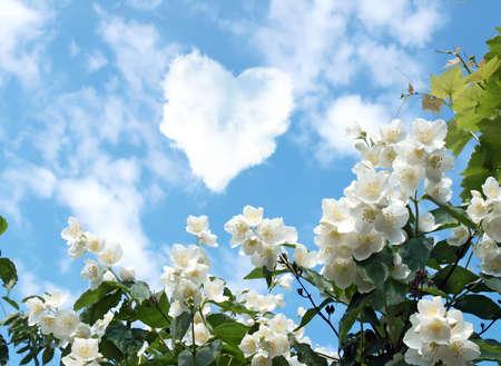 wolk in de vorm van een hart en een bloeiende jasmijn Stockfoto
